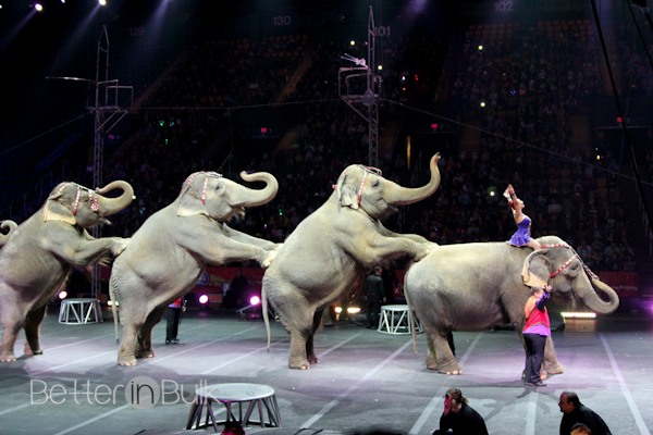 circus-preview-3