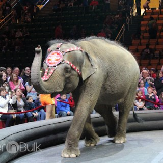 Built to Amaze – Ringling Brothers and Barnum & Bailey Circus #PSF