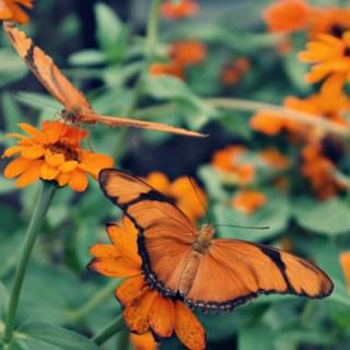 Butterfly Garden #WW