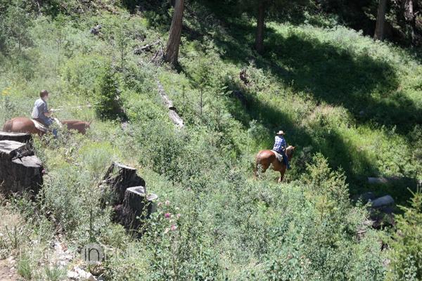 Horseback riding in Jackson Wyoming