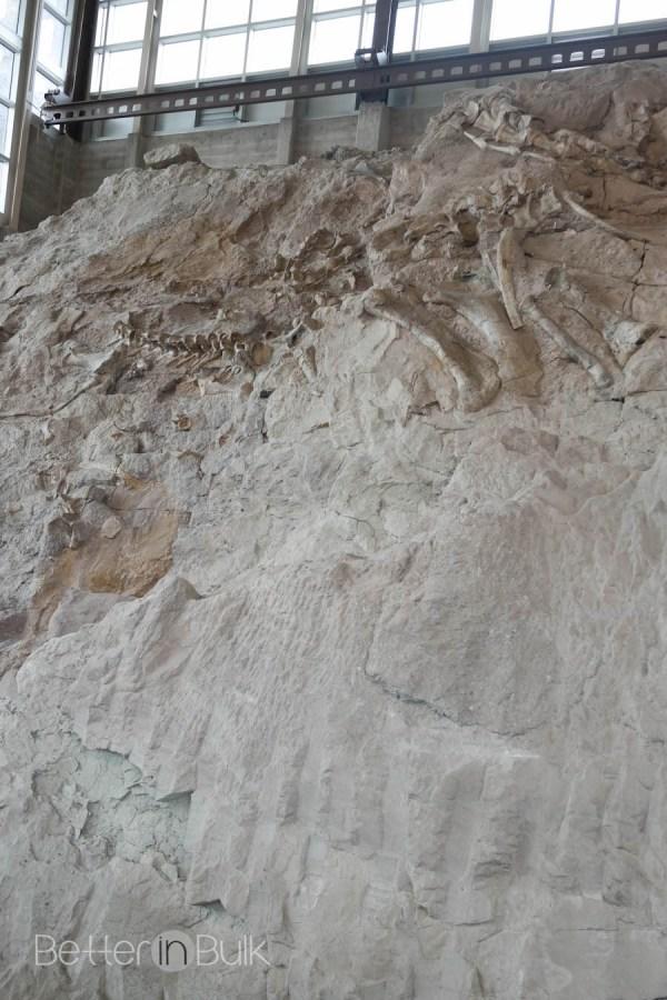 Dinosaur National Monument in Vernal Utah by Better in Bulk