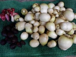 Turnip, beets, and radishes