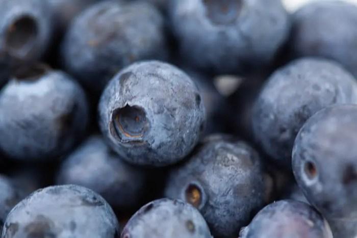 Fresh blueberries used in this blueberry swirl sourdough brioche bread recipe