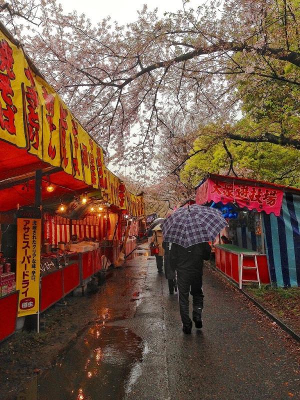 Foodicles Osaka Cherry Blossom 11