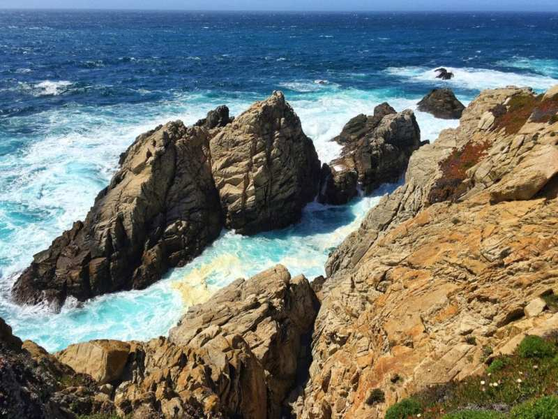 Foodicles Point Lobos 7
