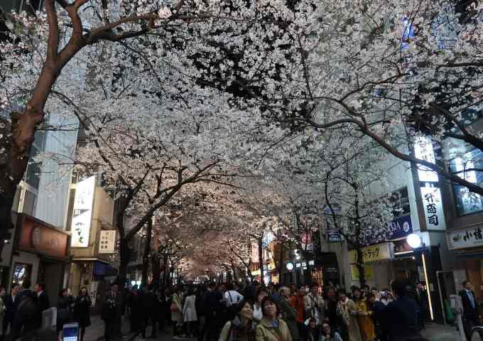 2019 Cherry Blossom Season