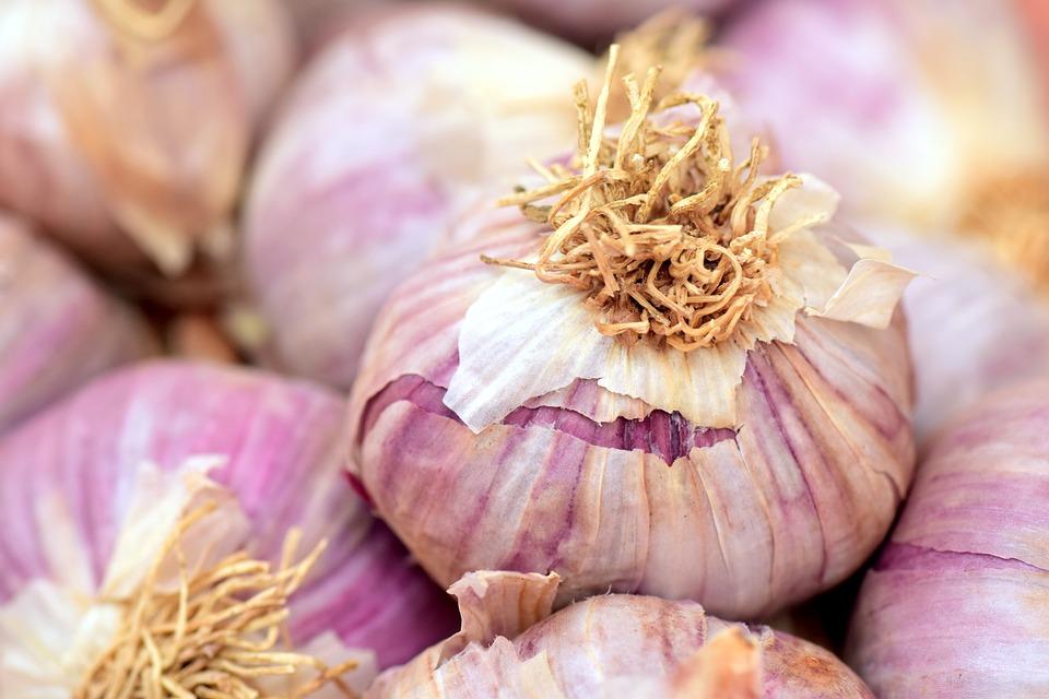 ail violet de Cadours
