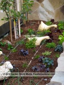 Foodie Gardener raised vegetable garden