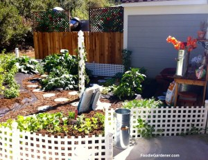 Home and Family show vegetable garden by shirley bovshow