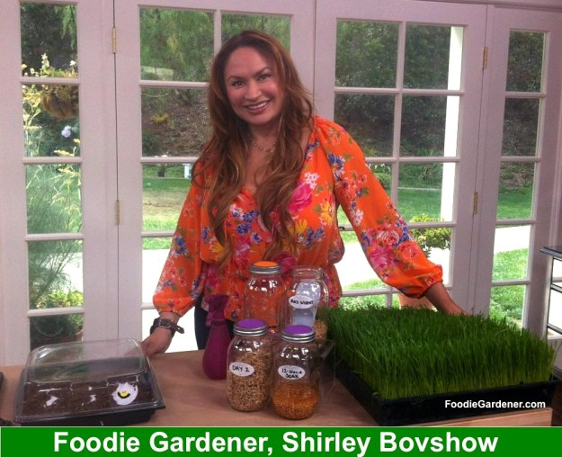 shirley bovshow presents on sprouting seeds on home and family show, hallmark channel