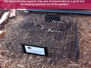The Squirrelinator cage squirrel trap
