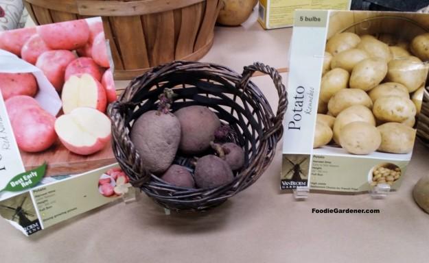 Certified Red Potatoes Kennebee Potato Seeds foodie gardener