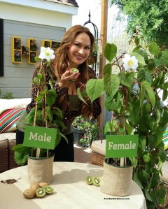 Shirley Bovshow Foodie Gardener Grow Kiwi fruit from seed home and family show