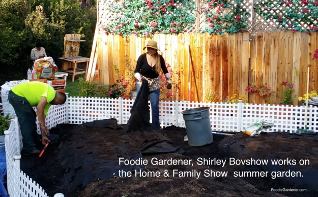foodie gardener shirley bovshow designing home and family show summer vegetable garden