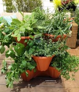 stackable planters filled with burpee home garden herbs foodie gardener