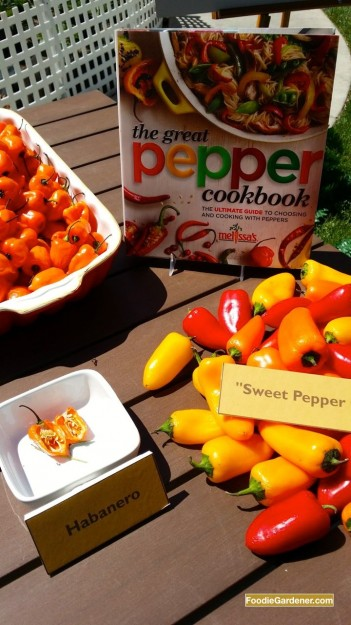 melissas fresh peppers featured on home and family show with foodie gardener shirley bovshow edible garden designer and garden expert