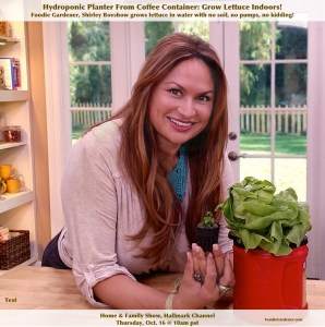 Edible garden designer expert shirley bovshow hydroponic lettuce kratky method repurposed coffee container non circulating hydropnics foodie gardener blog
