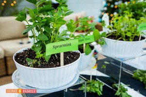 spearmint growing in white container on edenmakers blog