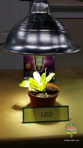 LED bulb grow light lettuce foodie gardener blog