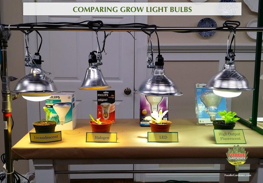 grow lights compared foodie gardener shirley bovshow