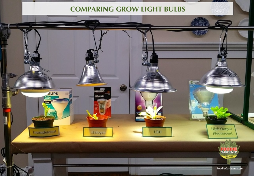 Grow Lights For Beginners Start Plants Indoors The Foodie Gardener