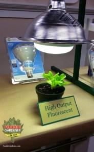 high output compact fluorescent light bulb HO fluorescent grow light lettuce foodiegardener blog