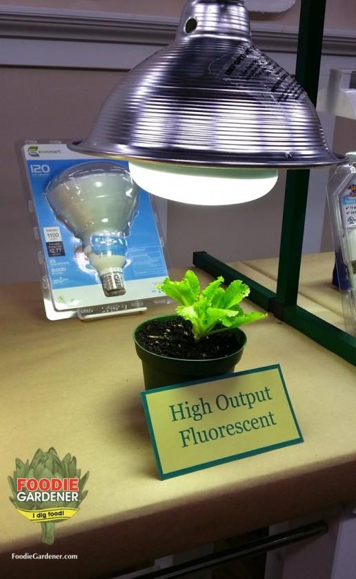 high output compact fluorescent light bulb HO fluorescent grow light lettuce foodie gardener blog