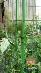tie wire around metal fence and plastic landscape pole tomato tower support shirley bovshow foodie gardener blog
