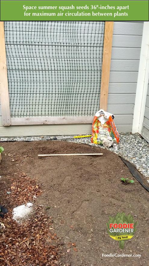 raised-garden-bed-spacing-summer-squash-plants-seeds-vertical-garden-support-trellis-shirley-bovshows-foodie-gardener-blog