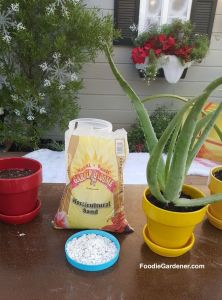 potted-aloe-vera-plant-with-potting-soil-perlite-horticultural-sand-for-improved-drainage-foodie-gardener-blog