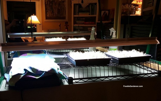 jump-start-grow-lights-on-micro-greens-foodie-gardener