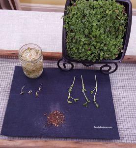 MATERIALS-FOR-GROWING-WHEATGRASS-MICROGREENS-INDOORS-FOODIE-GARDENER