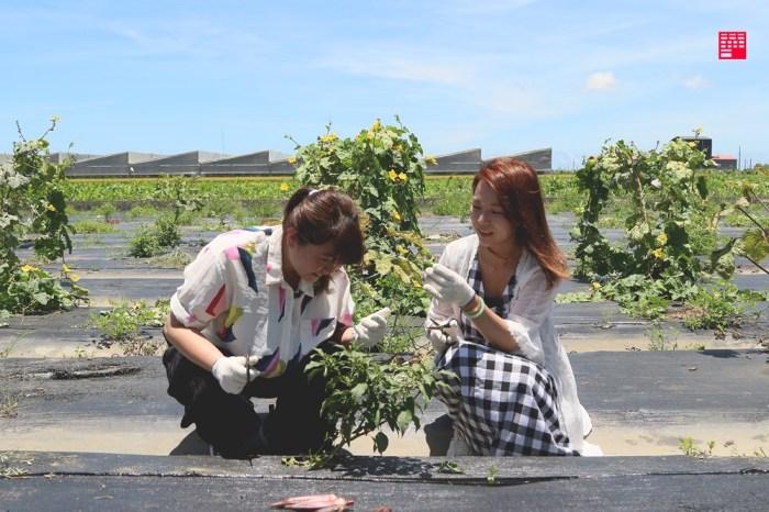 雲林一日遊/亞洲首座太陽能農場一日農遊!雲林晁陽綠能農場採珊瑚菇、過貓、青椒自煮火鍋 還有超營養「蟋蟀餅乾」