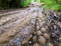 Mt. Pulag: Trail