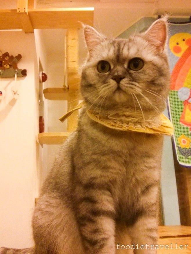 Myeongdong Cat Cafe 고양이놀이터 Cat Playground