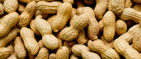 al_peanuts_cf_160304_12x5_1600