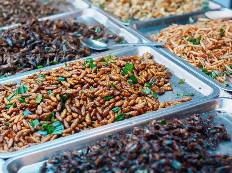 EU Verordnung erlaubt Insekten als Lebensmittel