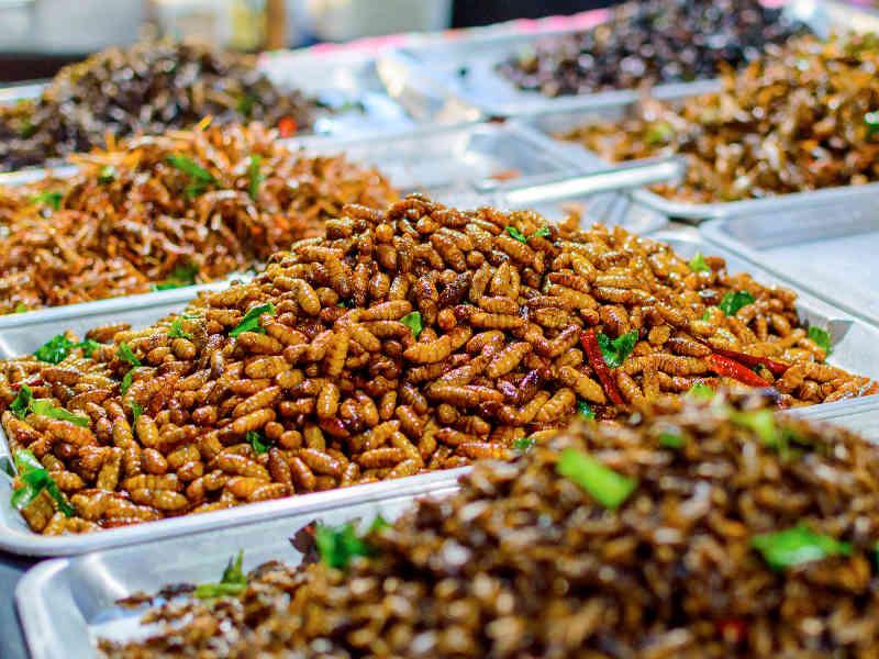 Zubereitung Insekten