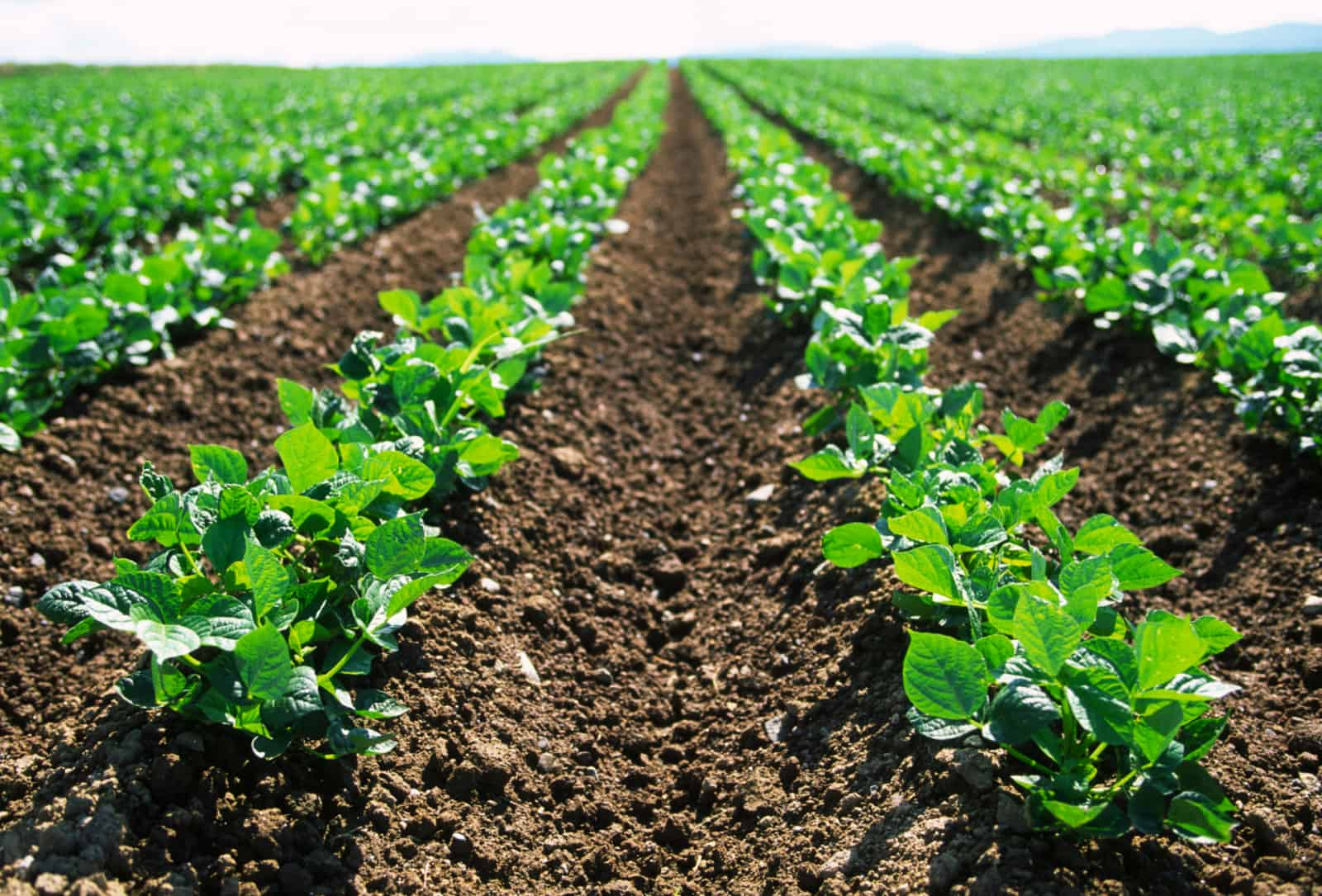 Fact Sheet Common Food Production Practices And Their