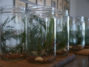 Measure out two sprigs of dill, two bulbs of garlic and a blend of pickling spices (a secret recipe Rick but includes mustard seeds, bay leaf, dill seeds & peppercorns.)