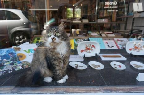 House cat at De Kookboekhandel