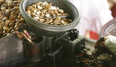 cashew-nuts-254061_640