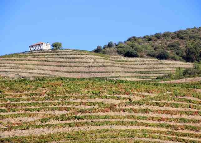 Wine terraces in the Douro Valley, Portugal // FoodNouveau.com