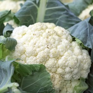 Cauliflower, a rich source of Pantothenic Acid (Vitamin B5) & Vitamin B6