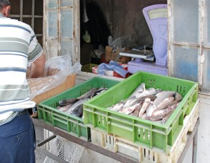 Goris - Market - Fish