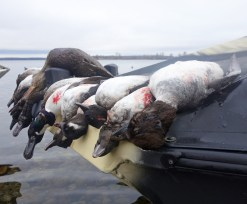 Lake Ontario - Duck Hunting