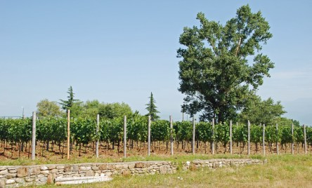 Georgia - Teliani Valley Vineyard