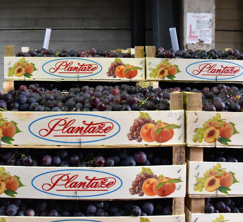 Montenegrin Wine - Plantaže - Grapes