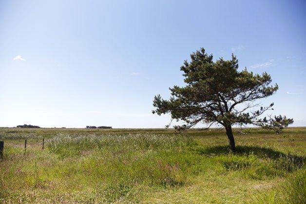 Læsø Saltsyderi