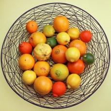 different shades of citrus